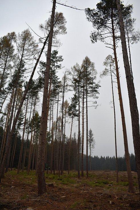 Kůrovec a sucho zapříčinili obrovskou ztrátu lesů na jihu Moravy.