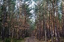 Procházka lesy v okolí Boskovic.