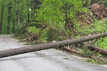 Vítr vyvracel stromy poblíž Němčic na Blanensku.