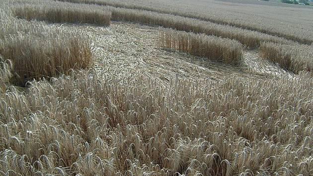 Kruh v obilí poblíž Skalice nad Svitavou.