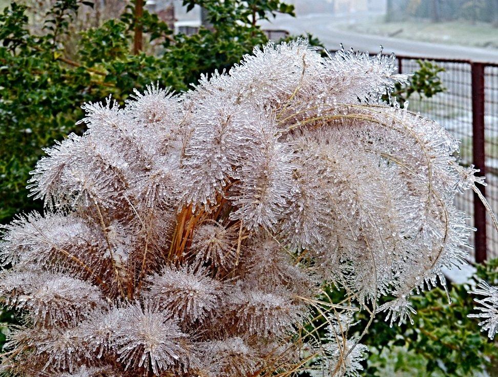 Dnešní ledová námraza v Bukovince.