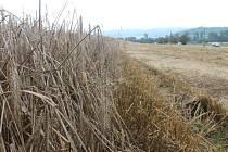 Letošní žně na Blanensku ještě nejsou u konce. Zkomplikovalo je proměnlivé počasí. Řada zemědělských podniků nemá kvůli dešti sklizeno. Obilí, které zůstalo na polích, je slehlé a začíná hnít. Škody jdou někde do statisíců.