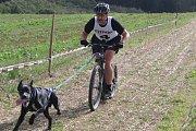 Na ježdění na Valše  v Louce závodily na dvě stovky psů a čtyřicet majitelů.