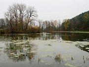 Oborský rybník v Černé Hoře.