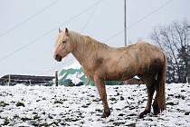 Další vycházka zimními Boskovicemi. Foto: Monika Šindelková
