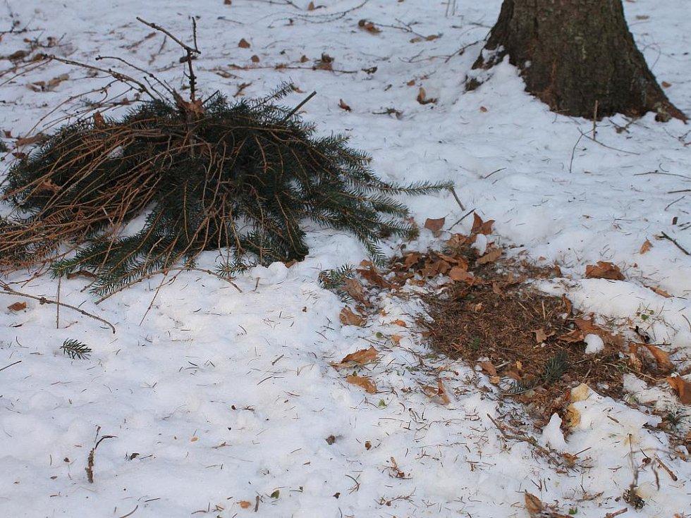 Lesníci dávají do krmelců seno a do žlabů například obilí, granule nebo kukuřici.