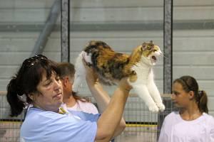 V Boskovicích se v sobotu a v neděli konala na zimním stadionu mezinárodní výstava koček. V neděli si návštěvníci výstavy prohlédli i ježky.