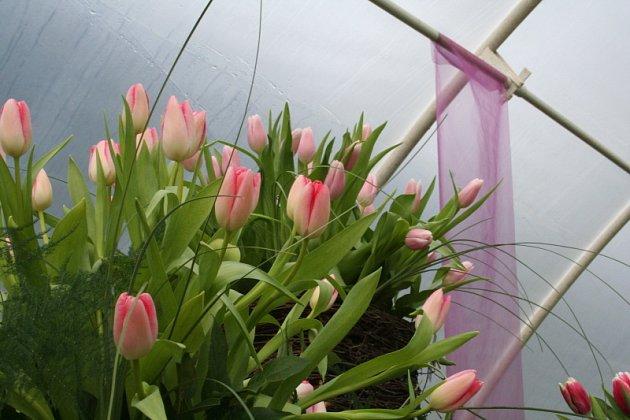 Výstava tulipánů a orchideií v Šebrově