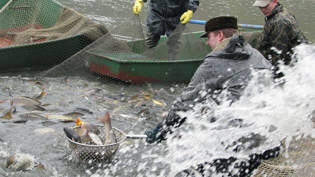 Výlov rybníka Olšovce 2009