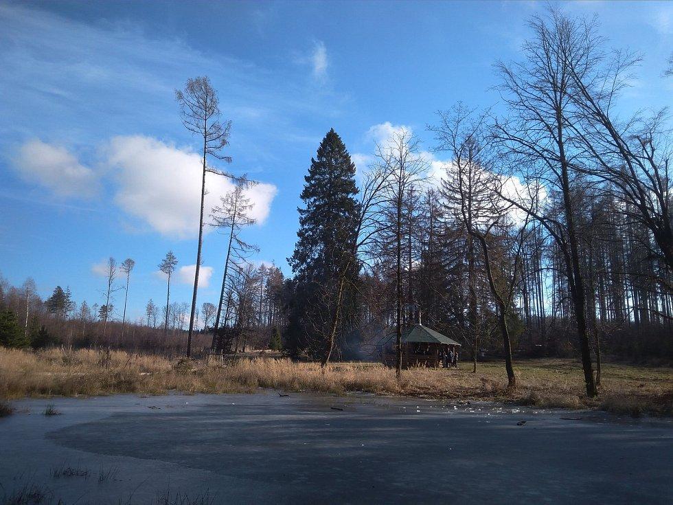 Na známé louce v Rakoveckém údolí ushly dominantní smrky.