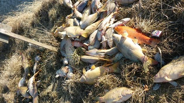 Ve dvou rybnících u Sudic uhynuly tisíce ryb.
