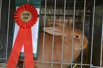V areálu farního dvora v Lysicích se v sobotu již podeváté konala Matějská výstava králíků.