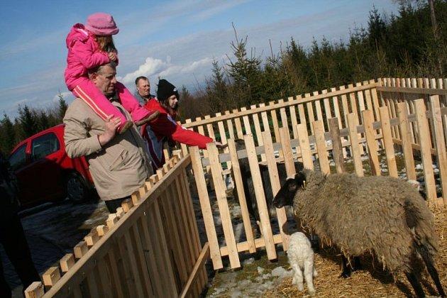 Slunečné dopoledne přilákalo naopak k rozhledně ve Veselici stovky výletníků na tradiční velikonoční jarmark. Hlavně děti měly radost z přítomných ovcí a stánků s cukrovou vatou a balónky.