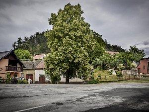 Takzvaná Zádvorská lepa z Velkých Opatovic vyhrála v soutěži Strom roku.
