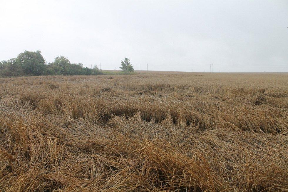 Tak vypadá místo se záhadným obrazcem v poli pšenice u Boskovic nyní. Po měsíci, kdy se piktogram objevil.