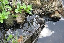 Někteří obyvatelé Křtin se domnívají, že se ve Křtinském potoce pod kostelem nacházejí splašky.