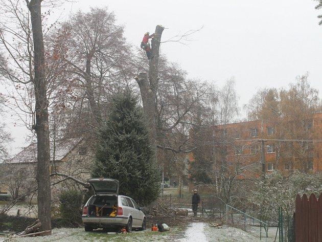 Dřevorubci skáceli několik stromů v v lokalitě zvané Na hrázi v Rájci-Jestřebí.