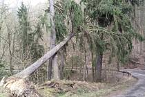 Popadané stromy v Újezdu u Boskovic.