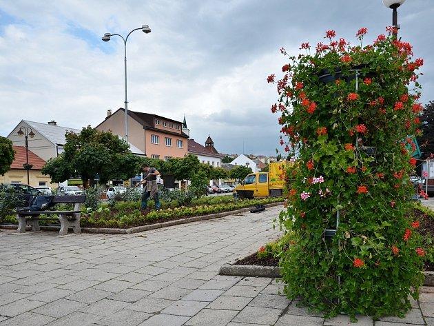 Obnova zeleně na Masarykově náměstí v Letovicích.