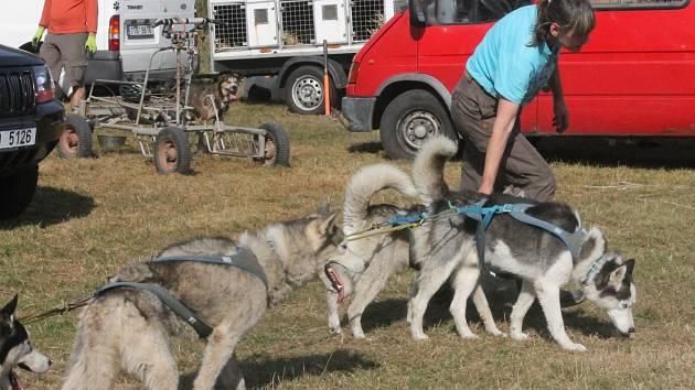 Na psí spřežení do Louky se sjeli soutěžící nejen z České republiky, ale i z dalších koutů Evropy.