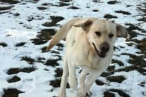 V blanenském útulku čeká na domov pět psů.