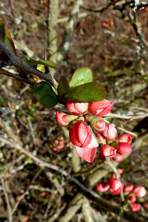 Další jarní procházka arboretem Šmelcovna.