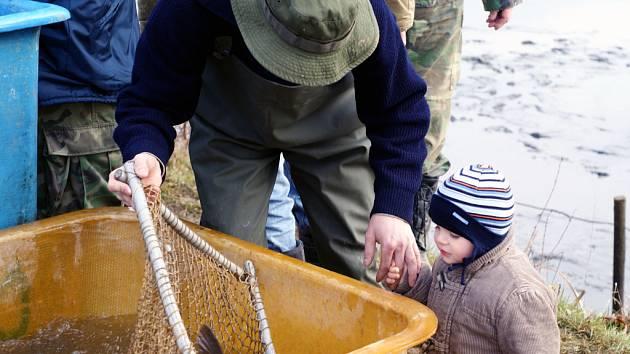V sobotu se uskutečnil výlov chovného rybníka v Rájci-Jestřebí