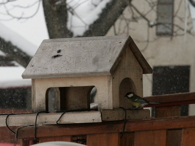 Lidé v těchto dnech přikrmují ptáky, labutě i kachny. Ke krmítkům přilétají sýkorky, kosi i vzácnější ptačí návštěvy pro zrní, semínka a strouhanku.