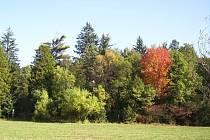 Podzimní příroda ve křtinském arboretu