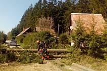 V Suchém kácí zbytek nebezpečných stromů.