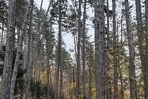 """Do ,,bojovky"""" v lese se zapojily i přespolní rodiny. FOTO: Archiv pořadatele"""