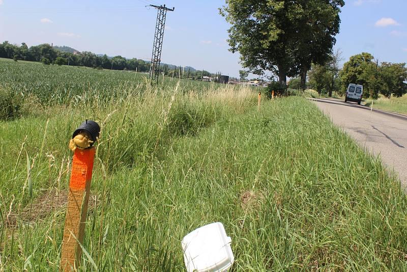 Kolem silnic u Rájce-Jestřebí myslivci rozmístili pachové ohradníky.