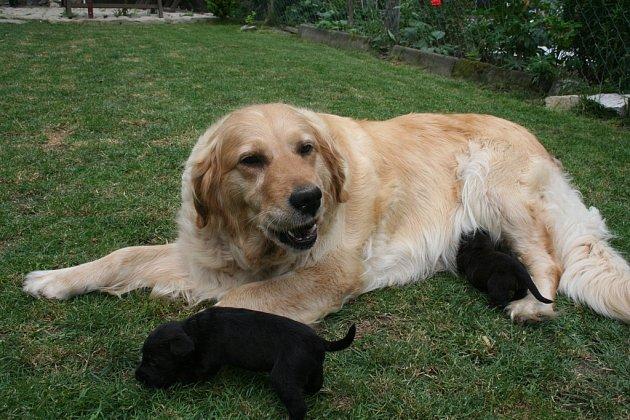 Megy a její adoptivní štěňátka.