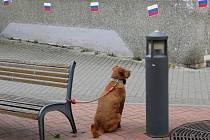 V centru Blanska se v pátek objevily papírové trikolóry v barvách ruské vlajky. Neznámý člověk jimi polepil zdi a průchod obchodního domu Centrum v Rožmitálově ulici a další místa v centru města. Před polednem část vlajek strhla policejní hlídka.