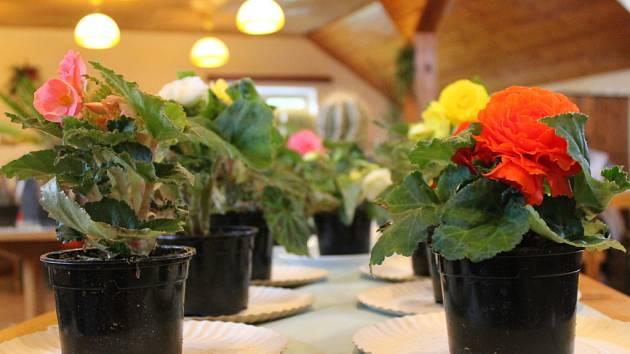 Blanenští zahrádkáři pořádají jarní výstavu a burzu kaktusů, konifer, květin a přísad zeleniny. Akce se koná v Domě zahrádkářů v blanenské ulici Křižkovského.