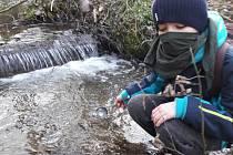Blanenští rybáři vysadili do potoků pstruhy.