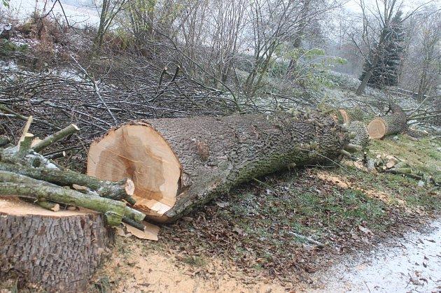Dřevorubci skáceli několik stromů vvlokalitě zvané Na hrázi vRájci-Jestřebí.