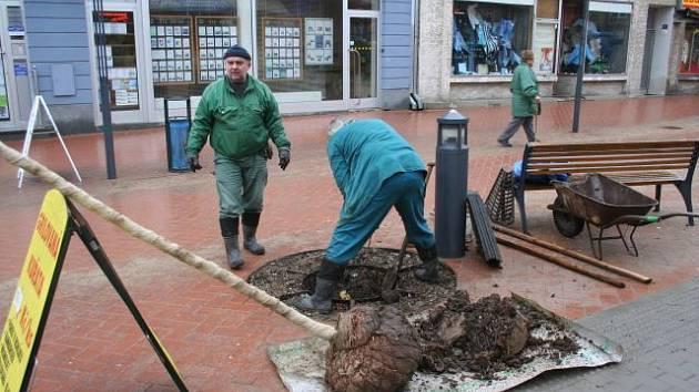 Celkem pět nových stromků zaplní mezery v zeleni na Rožmitálově ulici v Blansku.