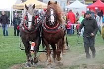 V Petrovicích se uskutečnil pátý ročník v kombinované soutěži dvouspřeží a jednospřeží chladnokrevných koní.