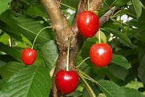 Podzim je pravý čas na výsadbu ovocných stromů.