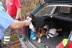 Kontrola očipovaného psa. Ilustrační foto.