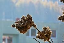 Procházka podzimním okolím Boskovic cyklostezkou k Mladkovu. Foto: Monika Šindelková