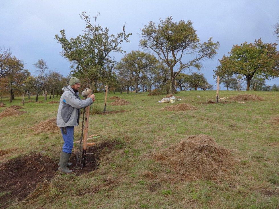 Členové blanenského sdružení Horizont a další dobrovolníci vysazují stromy.