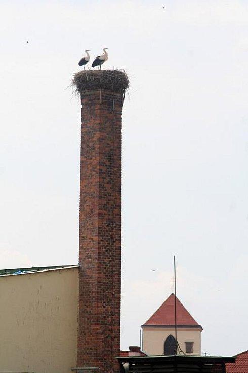 Na komínu naproti boskovické pekárně se uhnízdili čápi. Jako každý rok.