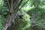 Okolí potoka Bílá voda u Holštejna na Blanensku lemují rozlehlé louky. Stát chce tuto lokalitu zařadit do budoucna na seznam zásobáren vody.
