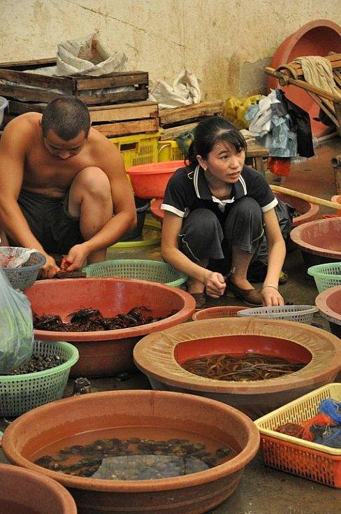na trhu na jihu Číny - žáby, hadi, brouci...vše čerstvé a připravené k uvaření