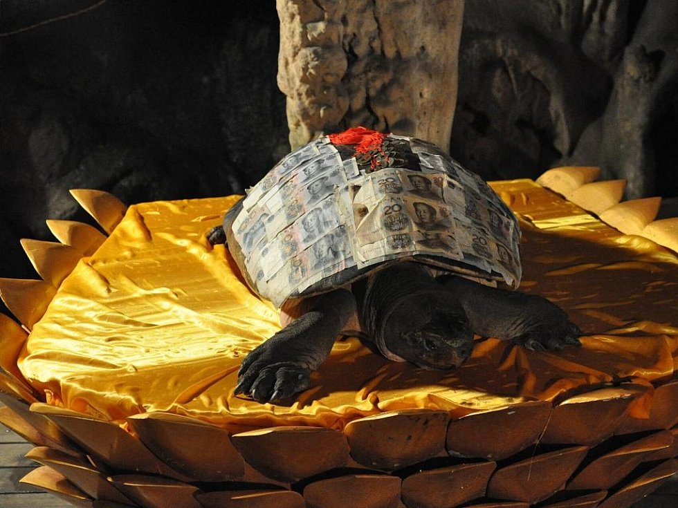 nejstarší obyvatel jeskyně - 1300 let stará želva