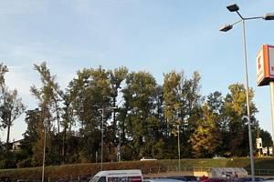 V Boskovicích pokácí poškozené stromy.