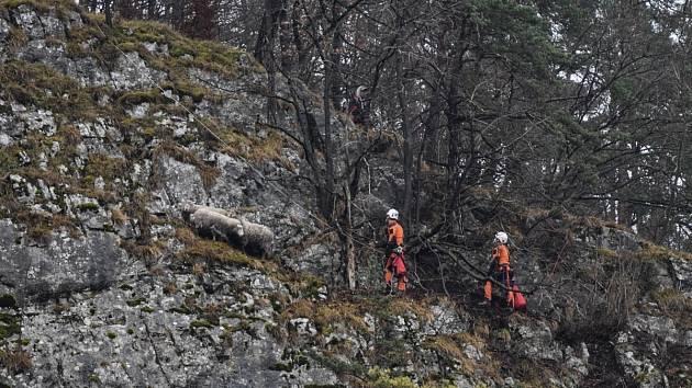Odvážné manévry na skále podstoupili jihomoravští hasiči při záchraně ovcí, které uvízly na skalní římse ve Sloupu na Blanensku.