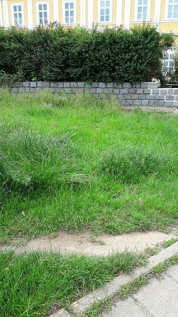 Hanu Kvapilovou vBoskovicích na Blanensku už několik let trápil stav tamních trávníků. Společně sněkolika přáteli proto před časem vBoskovicích založili iniciativu Zelená peřina. Kromě problematiky péče otrávníky se věnují také stavu stromů ve městě a